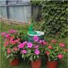 Sistema De Riego Automático Para 10 Plantas para cultivo indoor