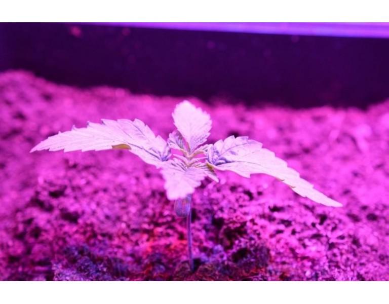 Iluminación en el cultivo interior